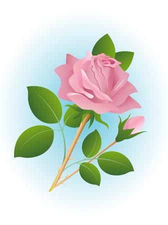 rosa negra: Rosa rosa