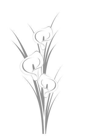 Calla lilies Vector