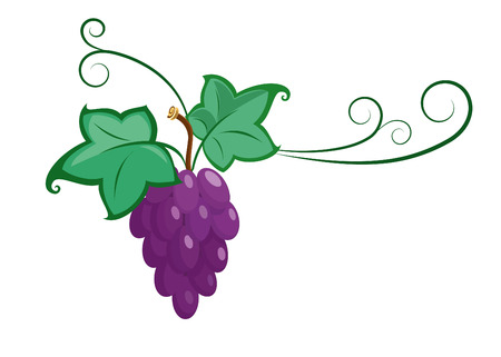 bunch of grapes: Vector  grape branche illustration