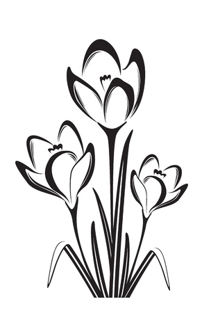 krokus: Zwart wit vector illustratie van de lente bloem Stock Illustratie