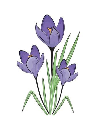 Vector illustration of first spring flower