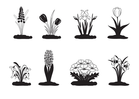 Black white vector illustration of spring flower Vector