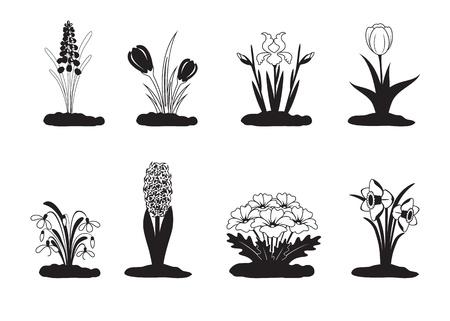 Black white vector illustration of spring flower Ilustrace