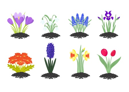 primula: Colourfull spring icons of flowers