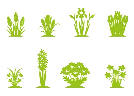 Six green separated vector images of first spring flowers Vector
