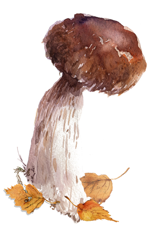 amanita: Amanita, poisonous boletus mushroom, hand drawn watercolor
