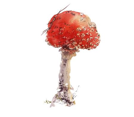 Amanita boletus mushroom, hand drawn watercolor Stock Photo