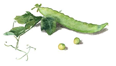 Watercolor hand-drawn green pod