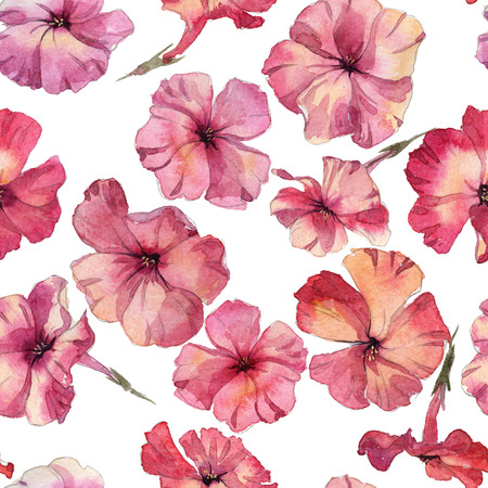 Phlox flowers hand drawn watercolor pattern Stock Photo
