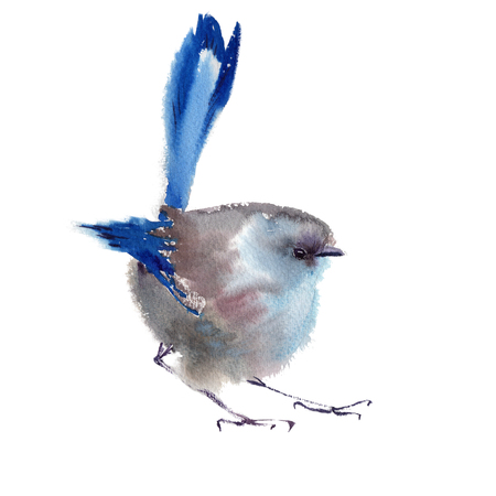 Winter fluffy soft bird hand drawn watercolor Stock Photo