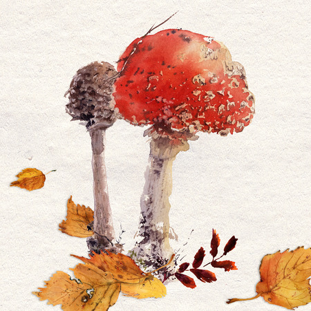 Amanita mushroom watercolor hand drawing