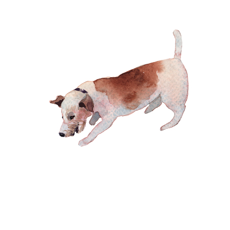 JackRussel terier dog puppy hand drawing watercolor