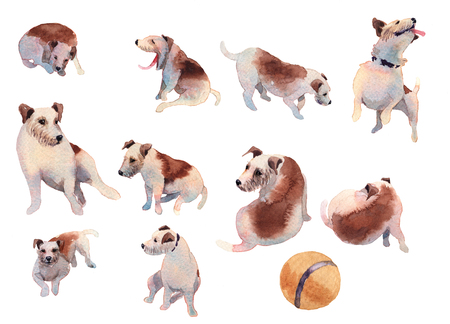 JackRussel terier dog collection hand drawing watercolor