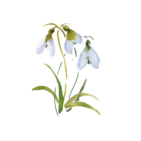 Groundhog Day flower blue spring snowdrop hand drawing watercolor illustration