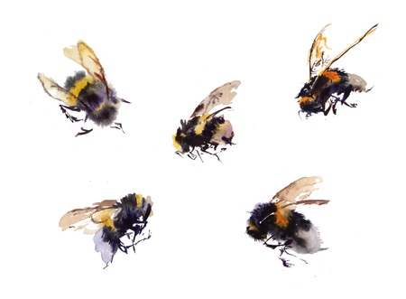 Collection Watercolor bees isolated on white background. hand drawn watercolor illustration