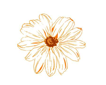 Camomile yello flower, hand drawing watercolor illustration on wite background