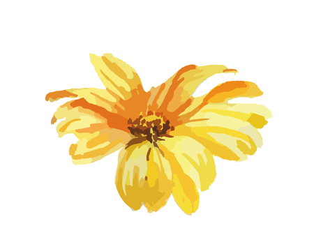 Camomile yellou flower, hand drawing watercolor illustration on wite background
