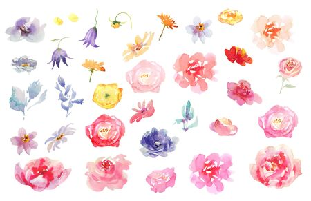 Collection Hand drawing watercolor pink and white flowers for Wedding bridal romanric rustic bouquet. ornament Фото со стока