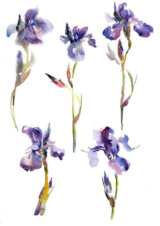Collection Collections of purple lily iris flowers. Hand drawing watercolor green and purple and blue flowers ornament