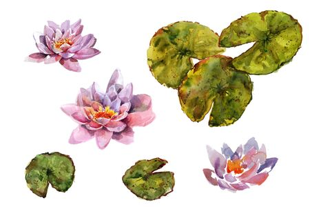Collection Water lily leaves and flowers bouquet. Hand drawing watercolor pink and purple and green flowers ornament