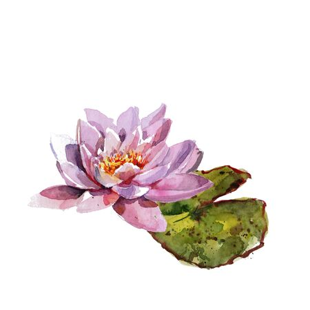 Water lily leaves and flowers bouquet. Hand drawing watercolor pink and purple and green flowers ornament