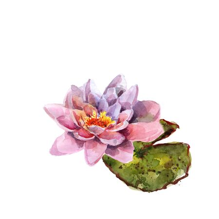 Water lily leaves and flowers bouquet. Hand drawing watercolor pink and purple and green flowers ornament Foto de archivo - 136247793