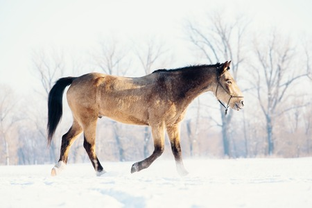 A single horse in a field covered by snow.