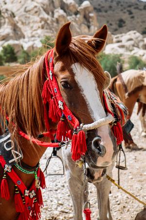 Jordanian beautiful horse rests near oasis. ancient city of Petra, Jordan. Wadi Rum