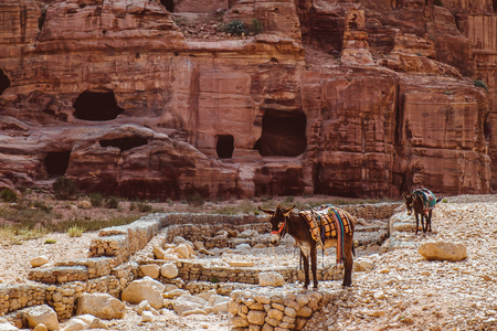 Mule at Petra Mountains in Jordania Stock Photo