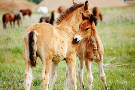 two baby foals are playing on a field Standard-Bild