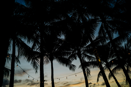 Philippines. Sunset and coconut palms on the shore. Stock Photo