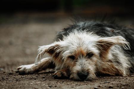 방황하고 병들고 불쌍한 개. 밖에 있는 노숙자 개