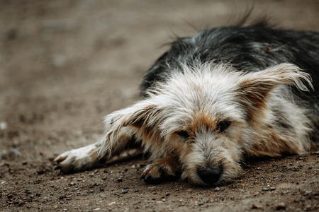 stray, diseased and poorly dog. Homeless dog outside