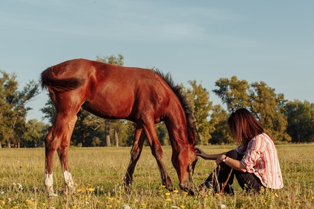 retrato, de, joven, mujer bonita, con, un, potro, en la granja