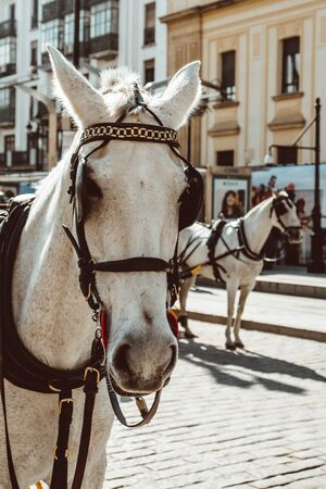 Horse carriage in Seville, the Giralda cathedral in the background, Andalusia, Spain 2019