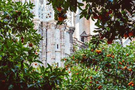Spain, Andalusia, Seville, the Cathedral bell tower seen from the orange tree courtyard. 2019