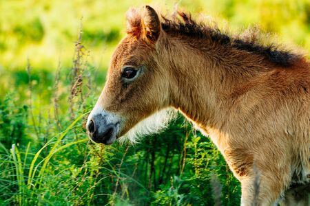 Cute shetland foal walking through the meadow, exploring the world. Magic forest