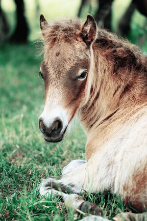 Little foal having a rest in the green grass with flowers Stock Photo