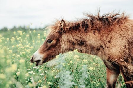 Portrait of red foal on field with flowers