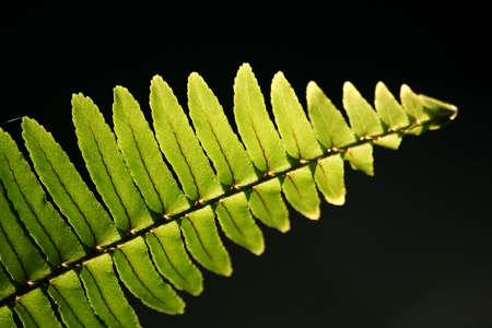 fern in lighting photo