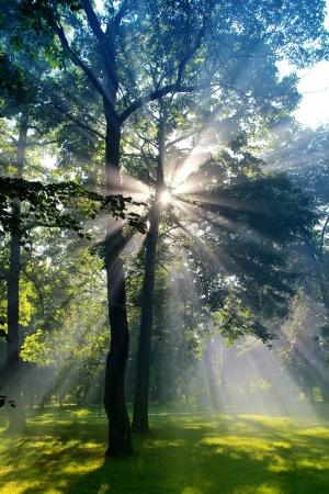 Forrest zon brandt als God aan het woord Stockfoto