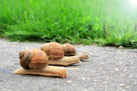funny animals: Snail run Stock Photo