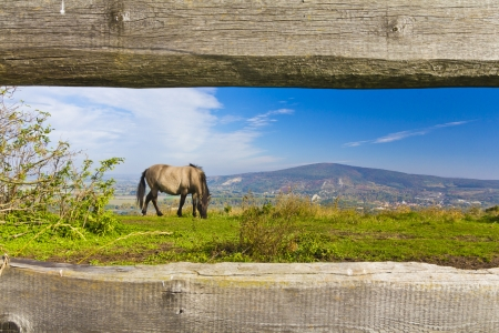 steeplechaser: Autumn landscape with horse and wooden fence theme