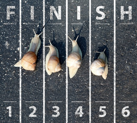 Snail run near the Finish line Stock Photo