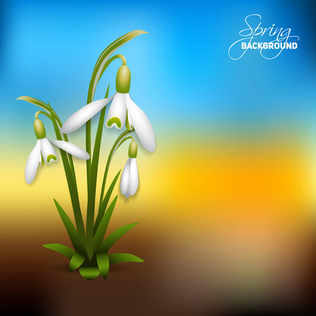 pasturage: Spring grass background - First spring flowers - Snowdrops - vector illustration Illustration