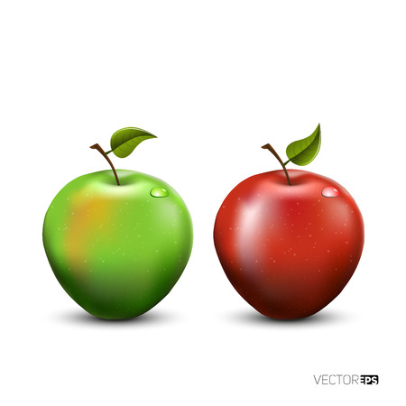 big apple: illustration of detailed big shiny green and red apple