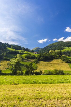 dandelion snow: Austrian landscape with meadows and mountains in the summertime Stock Photo