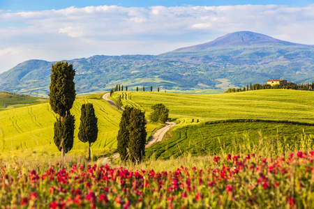 Beautiful and magical landscape colors of green spring landscape of Tuscany, red flowers field, Italy