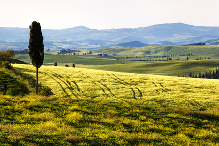 Tuscany, Landscape panorama, one cypress tree in land,Toscana - Italy 写真素材