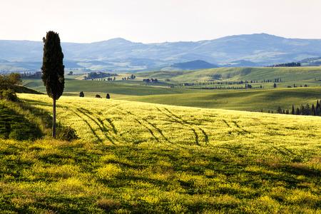 Tuscany, Landscape panorama, one cypress tree in land,Toscana - Italy Stock Photo